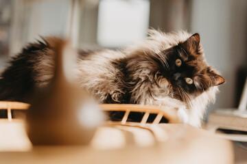 Photo sur Aluminium Chat A playful cat at home