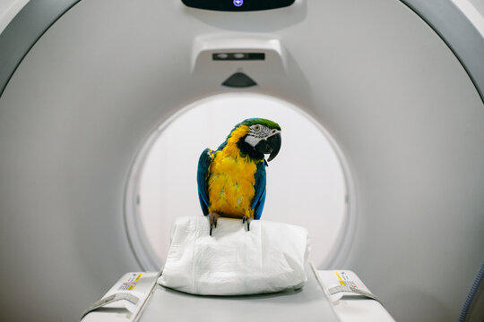 Macaw near tomography machine in clinic