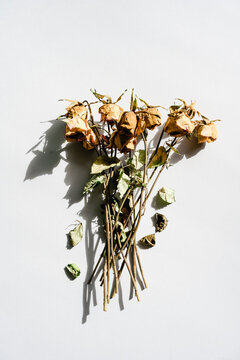Dead flowers on neutral background