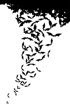 Bats in fly. Silhouettes on white background