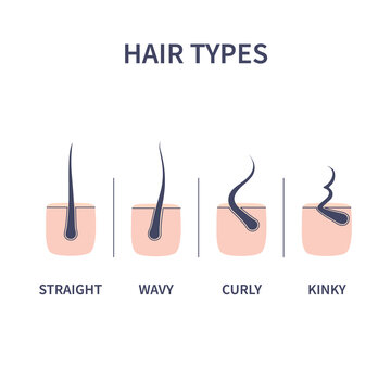 Straight, wavy, curly, kinky hair types classification set. Skin cross-section with follicles. Human hair growth style chart. Health care and beauty concept. Vector illustration.