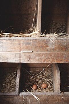 Collecting farm fresh, free range eggs on a hobby farm
