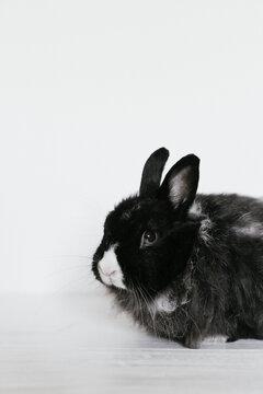 Cute Angora rabbit on white background