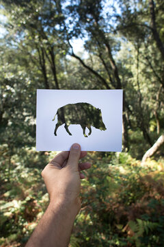 wild boar and forest view