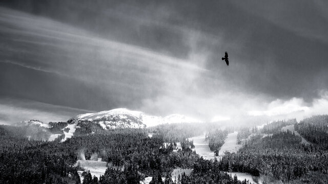View of snowcapped mountains with a lone bird flying in the sky