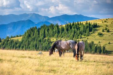 Konie w Górach - Rumunia
