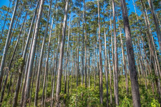 Sri Lanka Wald