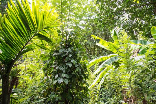Sri Lanka Pflanzen