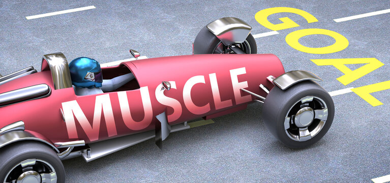 Muscle helps reaching goals, pictured as a race car with a phrase Muscle as a metaphor of Muscle playing important role in getting value and achieving success in life and business, 3d illustration