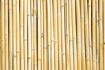 Bamboo wall background. Dry bamboo fence texture