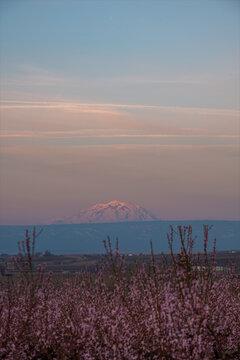Sunrising on Mt Adams, WA