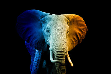 Portrait of elephant in a hot and cold shade