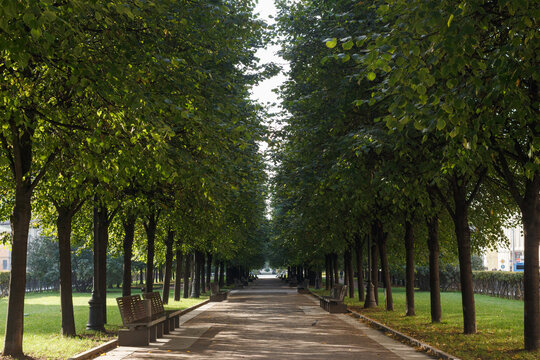 Tsvetnoy Boulevard in Moscow, Russia. Trees