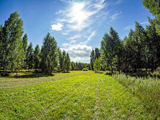 forest edge on a Sunny summer day, blue sky with light clouds, green field, Russia