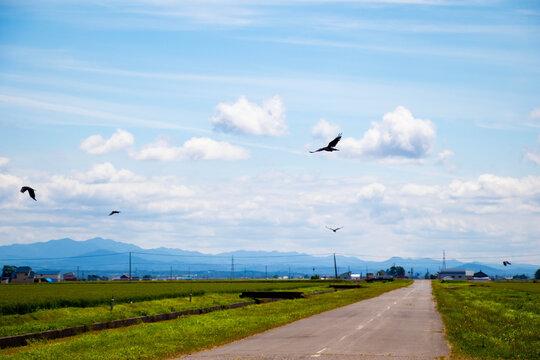 畑の空を飛ぶカラス