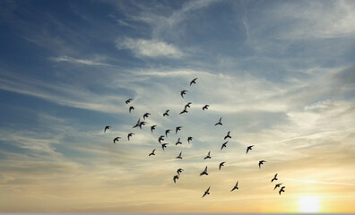 birds flying over the sunset sky