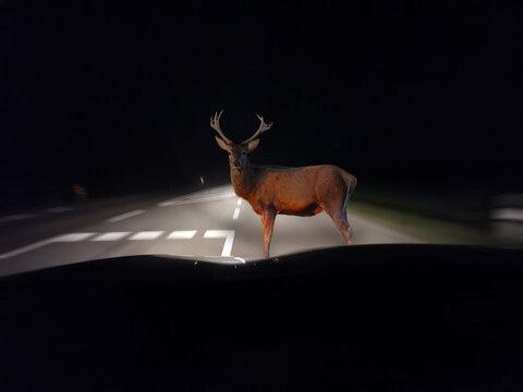Vorsicht Wildwechsel bei der Autofahrt