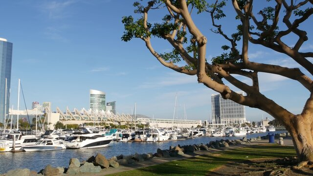 Embarcadero marina park, big coral trees near USS Midway and Convention Center, Seaport Village, San Diego, California USA. Luxury yachts and hotels, metropolis urban skyline and highrise skyscrapers