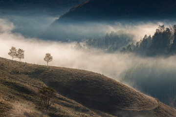 beautiful early autumn nature background foggy trees in the mountains