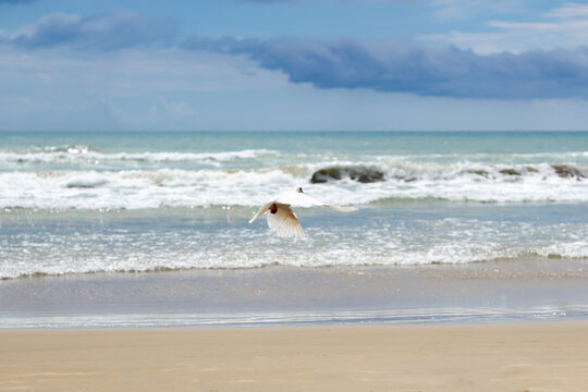 white seagull flies from us over the sandy beach against the backdrop of azure sea and cloudy sky