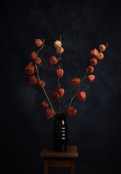 Autumn studio still life with orange lantern flowers, in rembrandt style (Cape gooseberry, Physalis alkekengi )