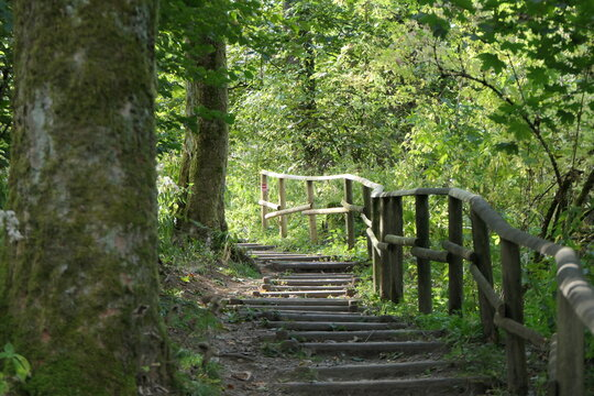 Stairway to heaven. A forest path with a wooden railing leads up the mountain. There are old trees on the shady path.