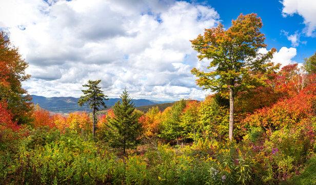 Beautiful fall foliage view from Mt Greylock, New England