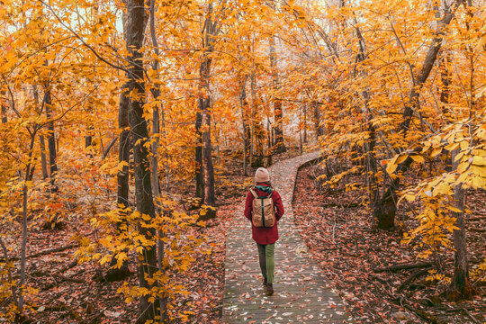 Woman walking in autumn foliage forest woods in city park with backpack. Travel hike fall destination in Quebec, Canada.