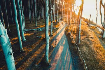 Wall Mural - Herbst im Gespensterwald