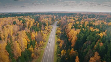 Wall Mural - Highway road in beautiful yellow autumn forest landscape. Aerial view, 4K UHD.