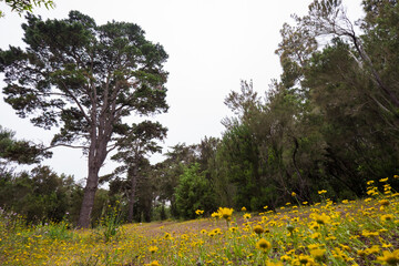 Yellow meadow in the forest