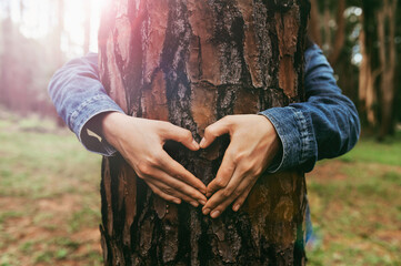 woman hand making heart shape on trunk of tree