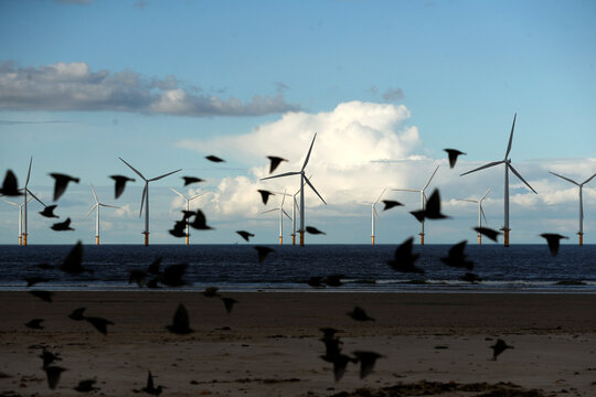 Wind turbines are seen in the background as birds fly at Redcar Beach in Redcar