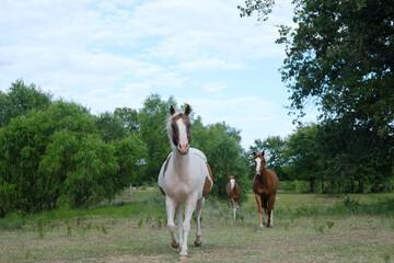 Wall Mural - Horses running through green field.