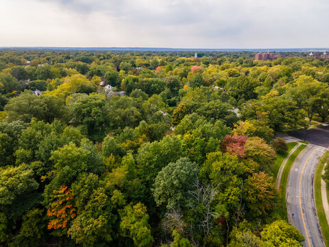 Aerial view of green marsh surrounded by trees changing leaves for fall, with a roadway.