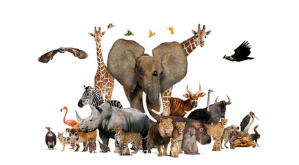 Fototapeta Large group of African fauna, safari wildlife animals together, in a row, isolated