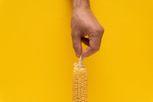 Closeup at the moldy yellow corn in male caucasian hand at yellow background, copy space.