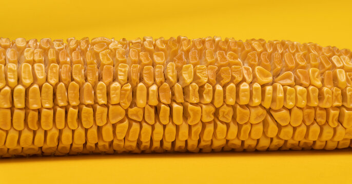 Macro view at moldy dried corn at yellow background.