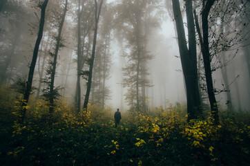 Fototapeta man in autumn woods, fantasy forest landscape obraz