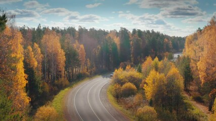 Wall Mural - Cars travelling on remote curvy highway road in beautiful yellow autumn forest landscape, aerial view, camera ascending up high. 4K UHD.