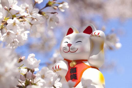 桜と左手を挙げた招き猫