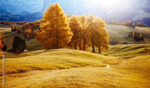Wall mural Yellow larches in the sunlight. Location Dolomite alps, Alpe di Siusi, Italy, Europe.