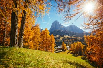 Wall Mural - Splendid autumn landscape in Val Gardena. Location Dolomites, Trentino Alto Adige, Italy, Europe.