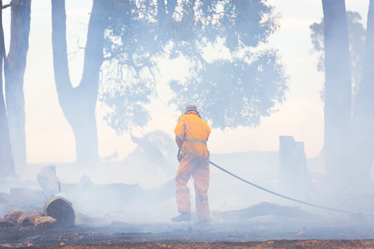 Firefighter with hose spraying down burnt trees after bushfire