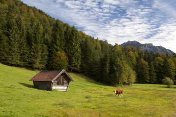 alpine pasture in Bavaria Wall mural