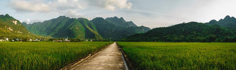 Photo sur Aluminium Les champs de riz Terraced rice field with rural road in Lac village, Mai Chau Valley, Vietnam, Southeast Asia.