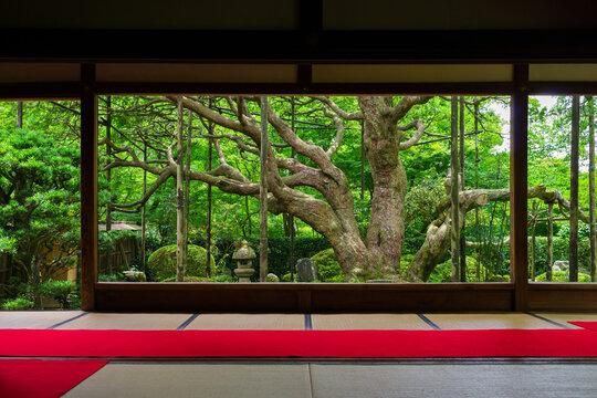 京都 宝泉院