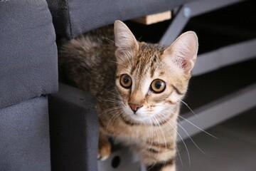 Photo sur Aluminium Chat cat on the window