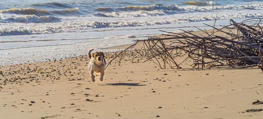 Poranny spacer z najlepszym przyjacielem o wschodzie słońca po plaży nad Adriatykiem.