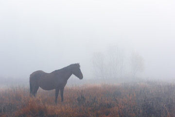 Photo sur Plexiglas Dinosaurs Brown horse in foggy meadow in mountains valley. Landscape photography